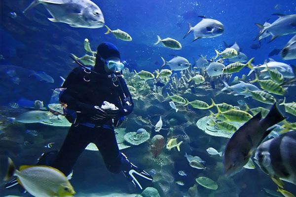 Diving600