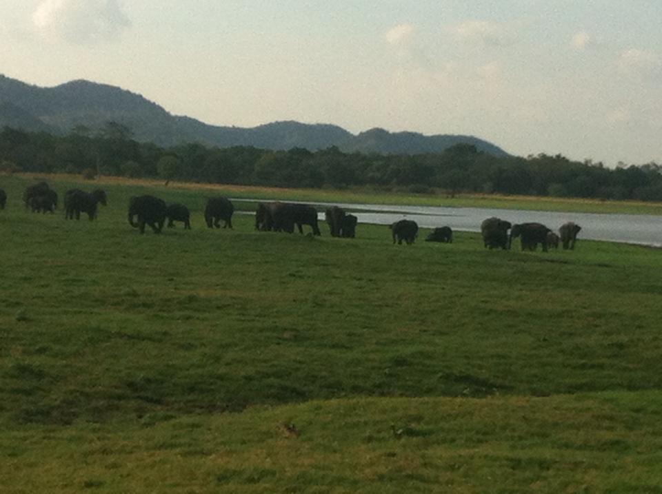 olifanten 2